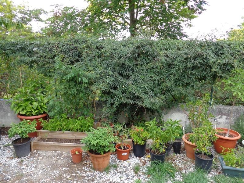 Mon ptit jardin à moi. Dsc00715