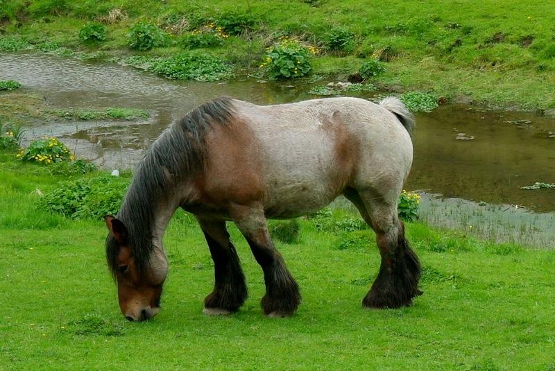 mon gros cheval !!!  Cheval12