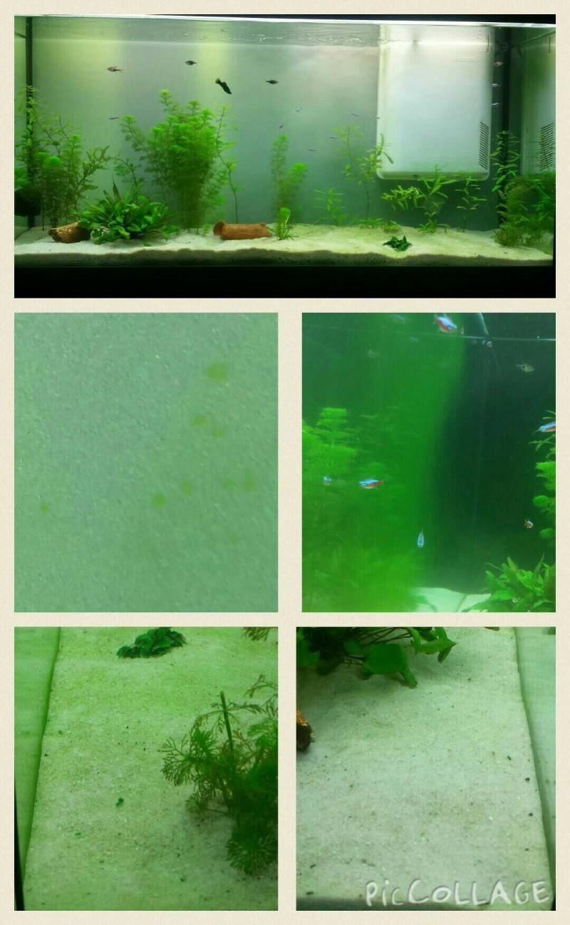 eau trouble, eau verdatre, vitre gluante verte, points verts - Page 2 14389810