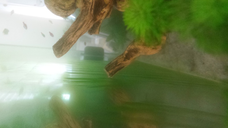 eau trouble, eau verdatre, vitre gluante verte, points verts 20150810