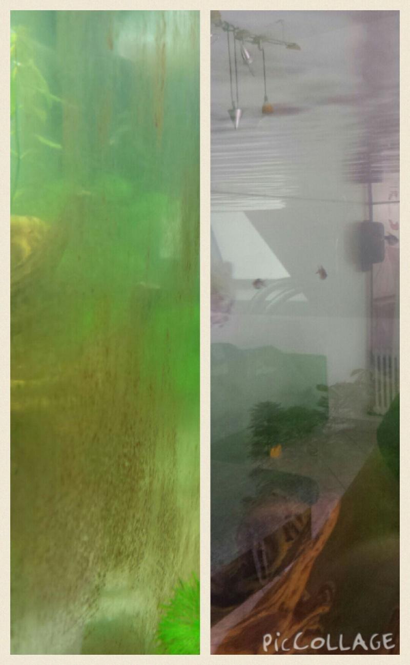 eau trouble, eau verdatre, vitre gluante verte, points verts Collag11