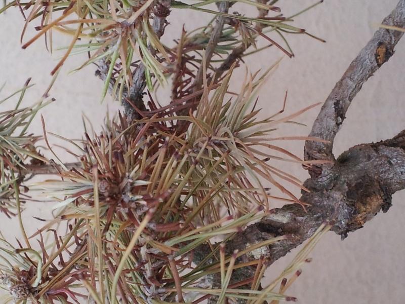 Problemi con pino  20150811