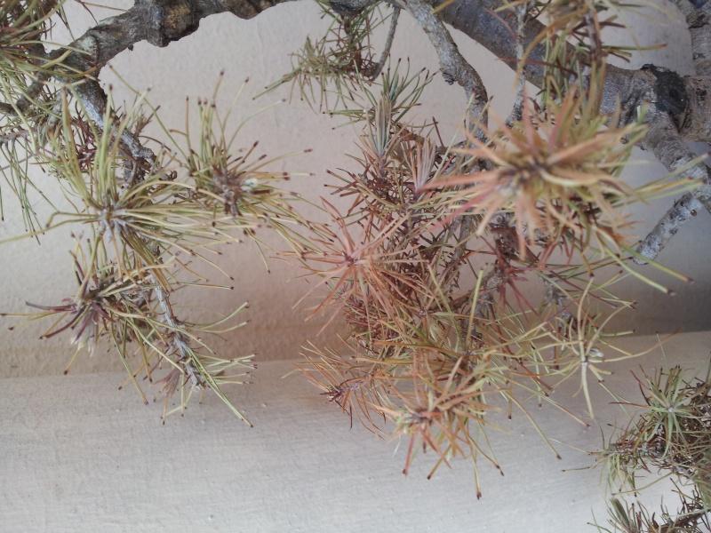 Problemi con pino  20150812
