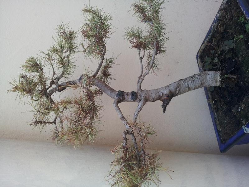 Problemi con pino  20150813