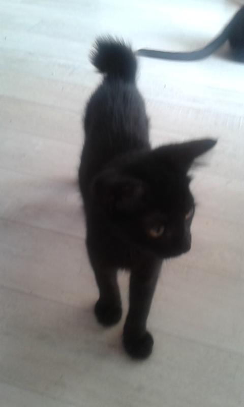 Lucky chaton adopté en septembre 2015 Lucky11