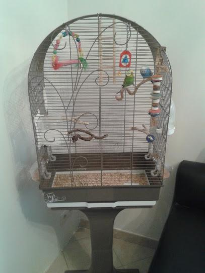 Cède jeune couple de perruches ondulées + cage 20150810