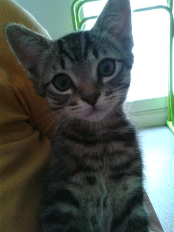 [Adopté] Laslo, un amour de chaton Image10