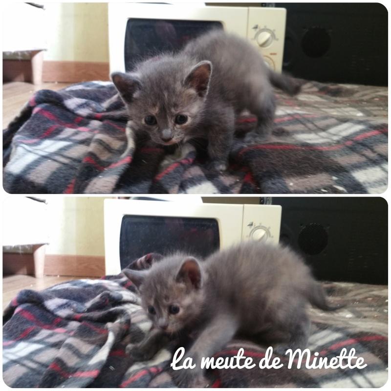 Minette, mère courage La_meu10