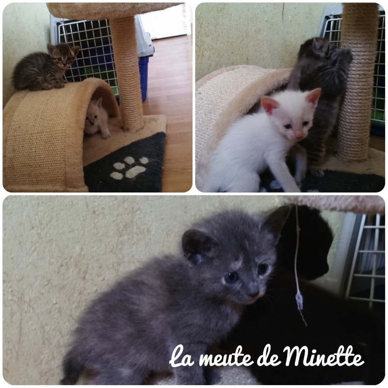 Minette, mère courage La_meu11