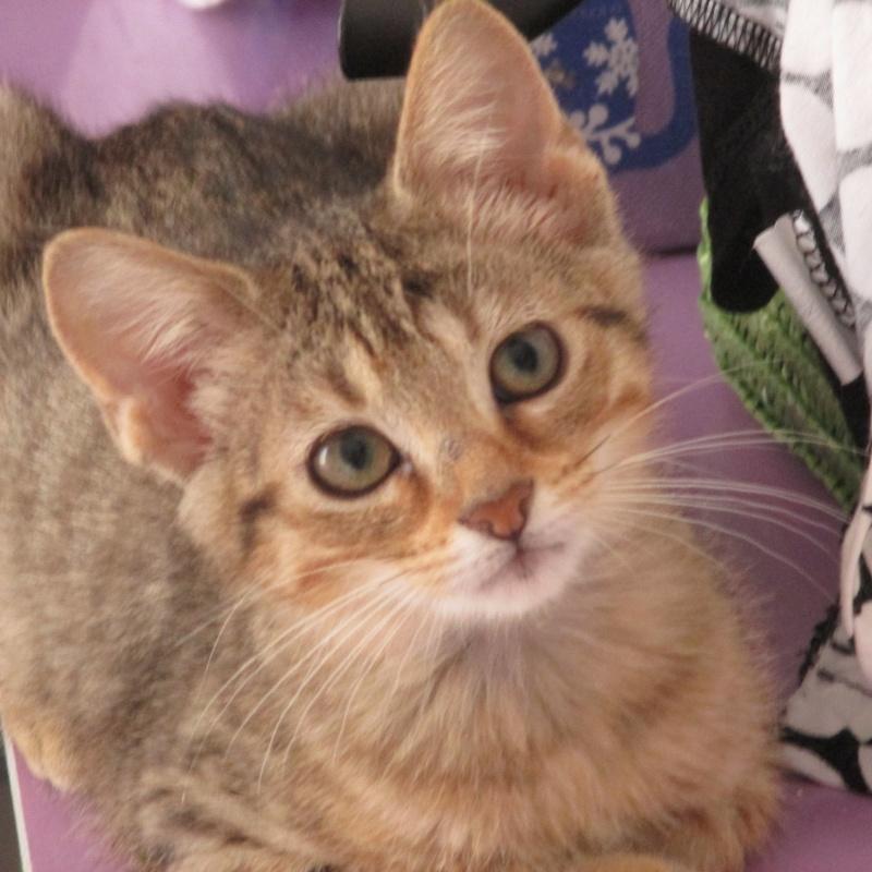 [Adoptée] Loupiotte, chatonne Loupio10