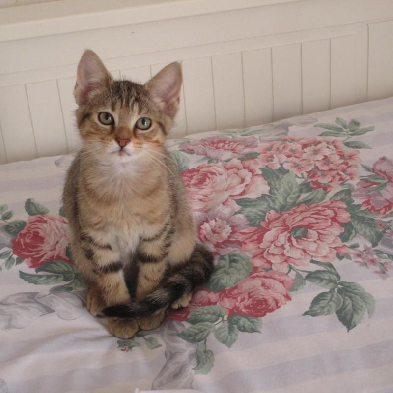 [Adoptée] Loupiotte, chatonne Loupio11