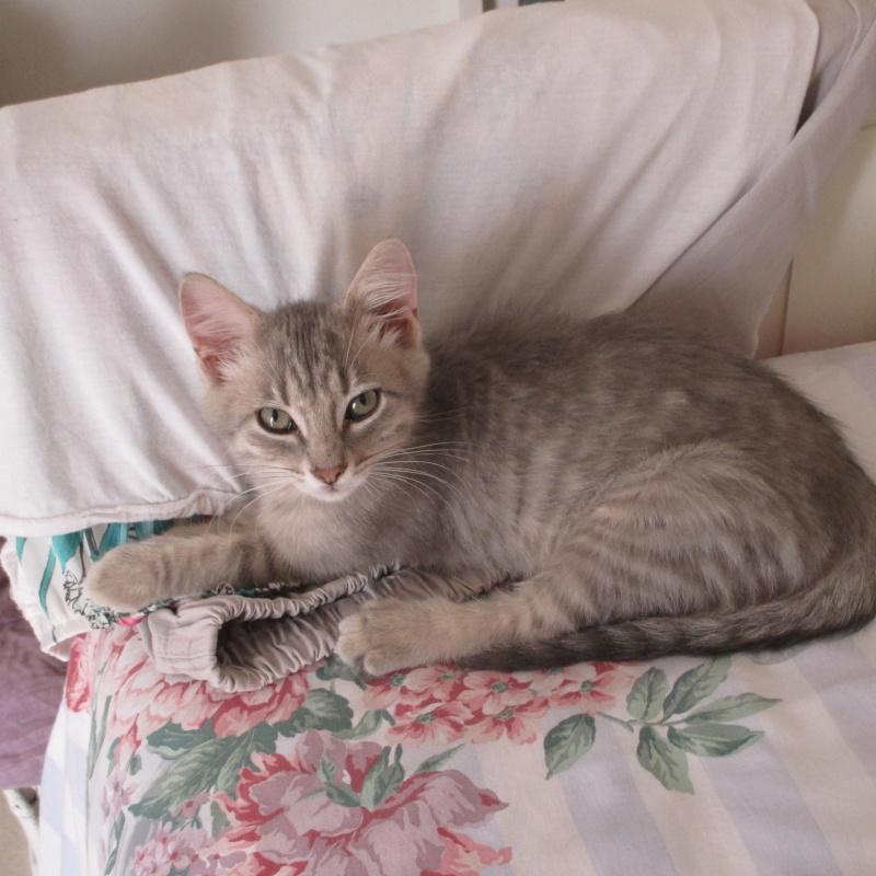 [Adopté] Love It, chaton Love_i10