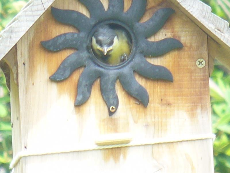 nichoir à mésanges P1250311