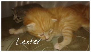 [Adopté] Lexter chaton Lexter12