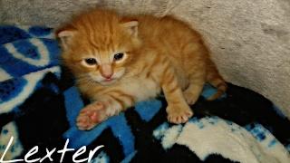[Adopté] Lexter chaton Lexter14