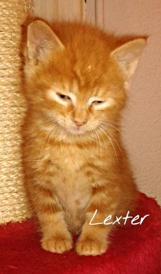 [Adopté] Lexter chaton Lexter15