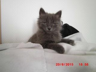 [Adopté] Limao, un chaton aimant tétouiller Limao10