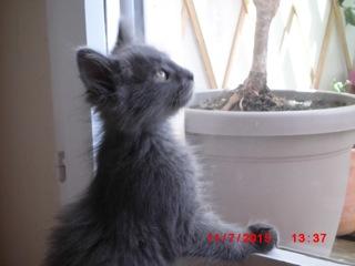 [Adopté] Limao, un chaton aimant tétouiller Limao_11