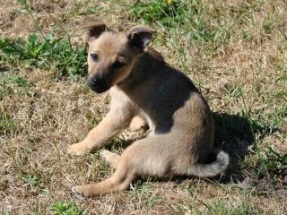 [Adopté] Lethon, un chiot joeur Louya_10