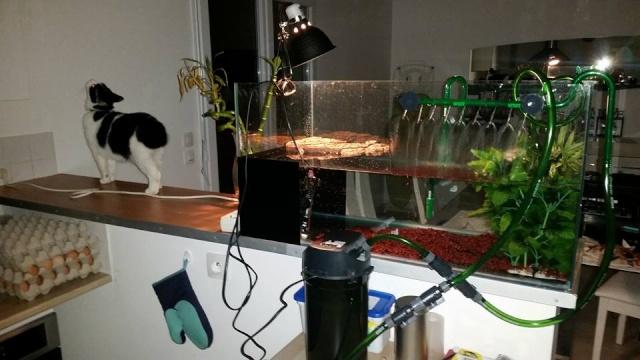 ma mauremys sinensis et son aquaterra 1110