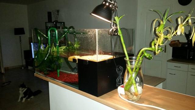 ma mauremys sinensis et son aquaterra 11825610