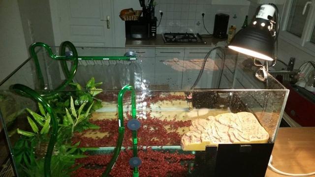 ma mauremys sinensis et son aquaterra 11825711