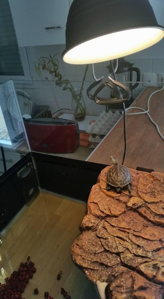 ma mauremys sinensis et son aquaterra 410