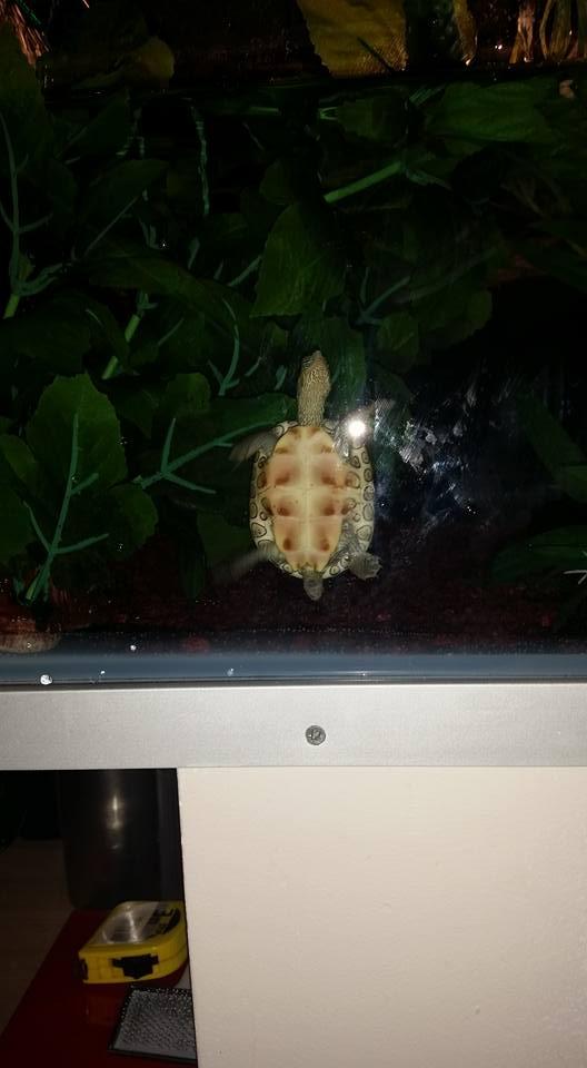 ma mauremys sinensis et son aquaterra 510