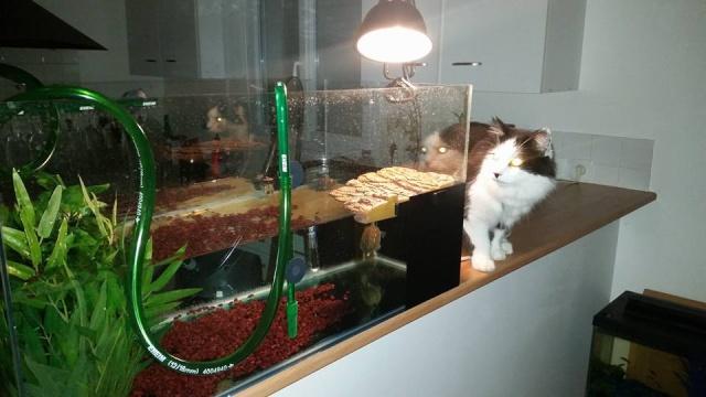 ma mauremys sinensis et son aquaterra 910