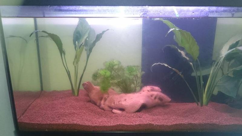 nouveau aquarium Klkkkk17