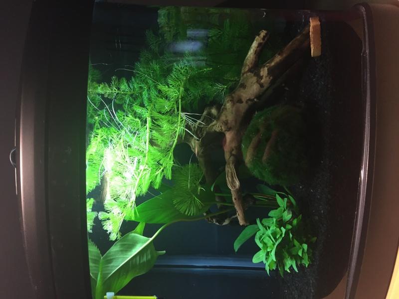 Mon 30 litres planté (besoin d'avis).  Image20