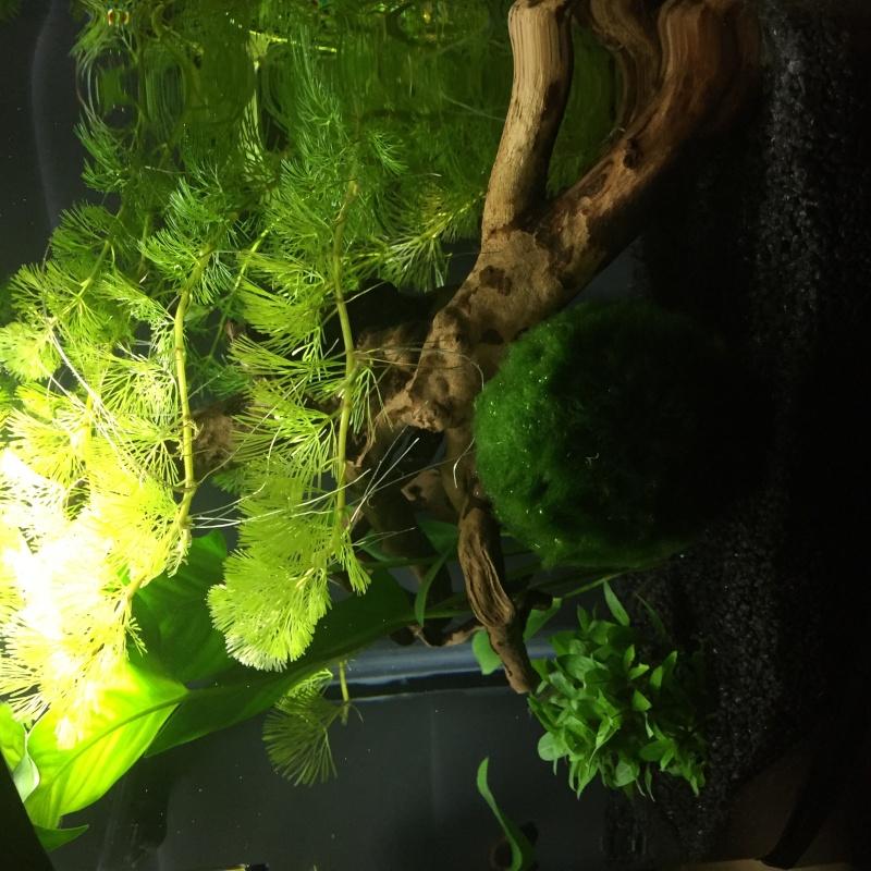 Mon 30 litres planté (besoin d'avis).  Image30
