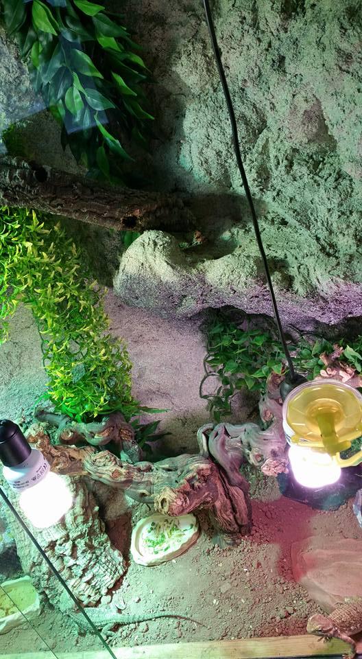 Mon terrarium (Photos+description+news a propos des changements) 11885310