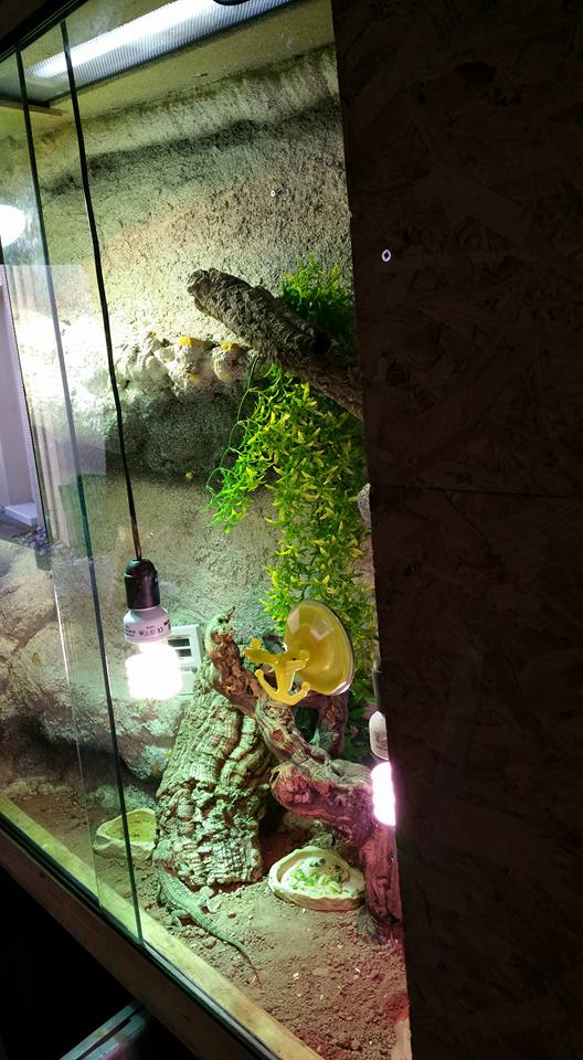 Mon terrarium (Photos+description+news a propos des changements) 11889610