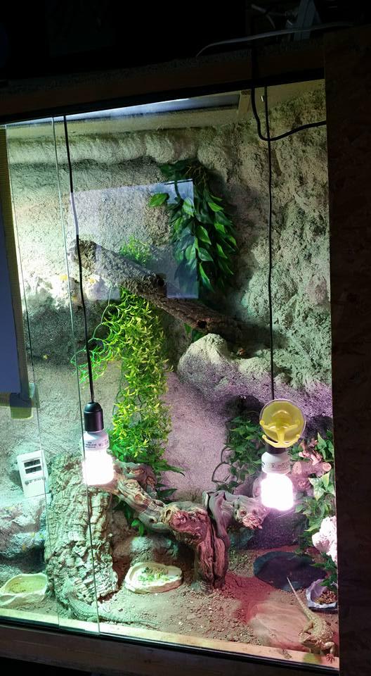 Mon terrarium (Photos+description+news a propos des changements) 11891010