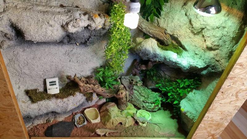 Mon terrarium (Photos+description+news a propos des changements) 11903810