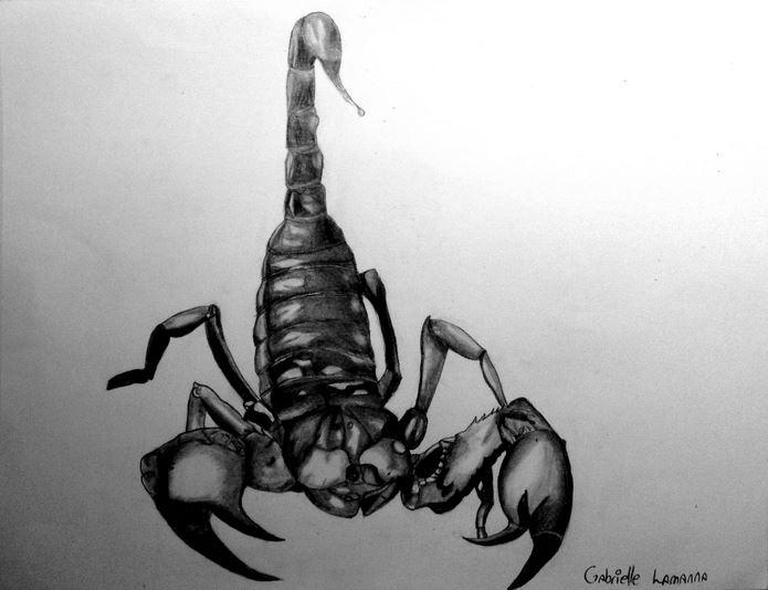 Alee Scorpi10