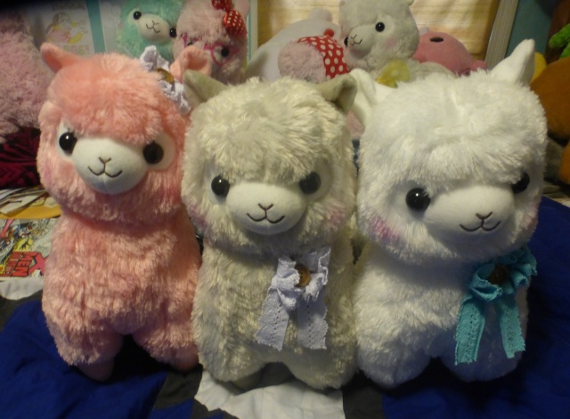 August Girly Alpacasso - Page 4 P1160413