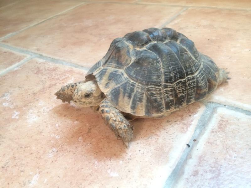 [HELP] Ma tortue n'hiberne pas! Img_1411