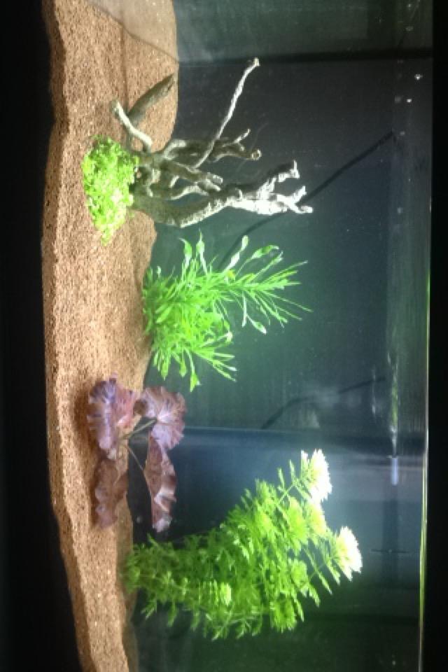 aquarium 60 litres Img_0612