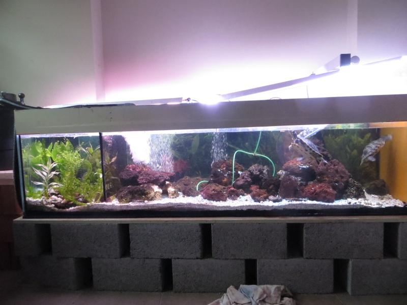Aquarium TST 00_aqu11