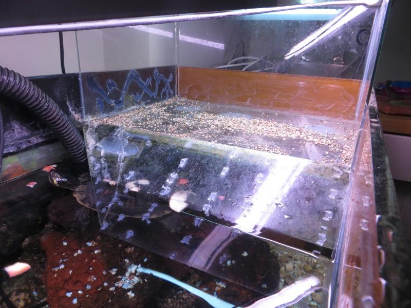 Aquarium TST 01_pla10