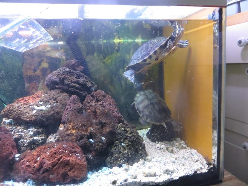 Aquarium TST 02tort10