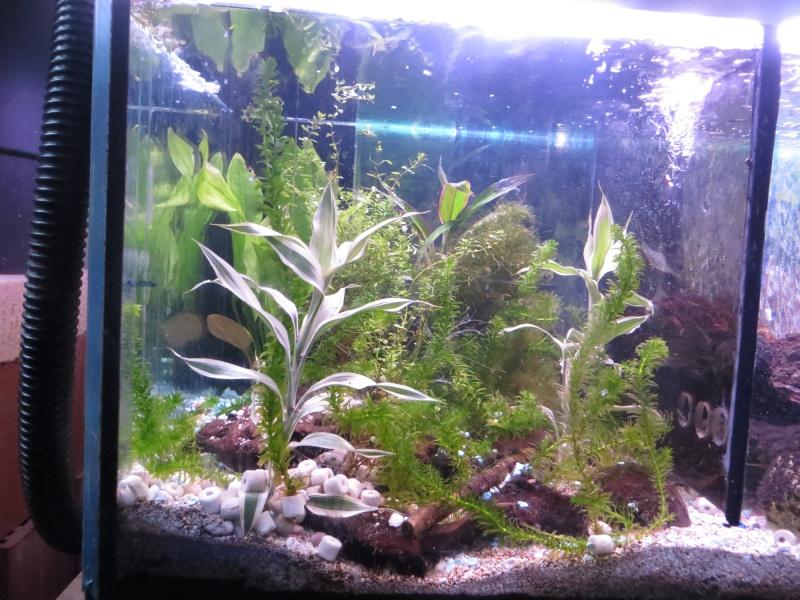 Aquarium TST 03_pla10