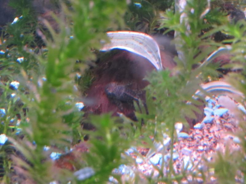 Aquarium TST 04_anc10