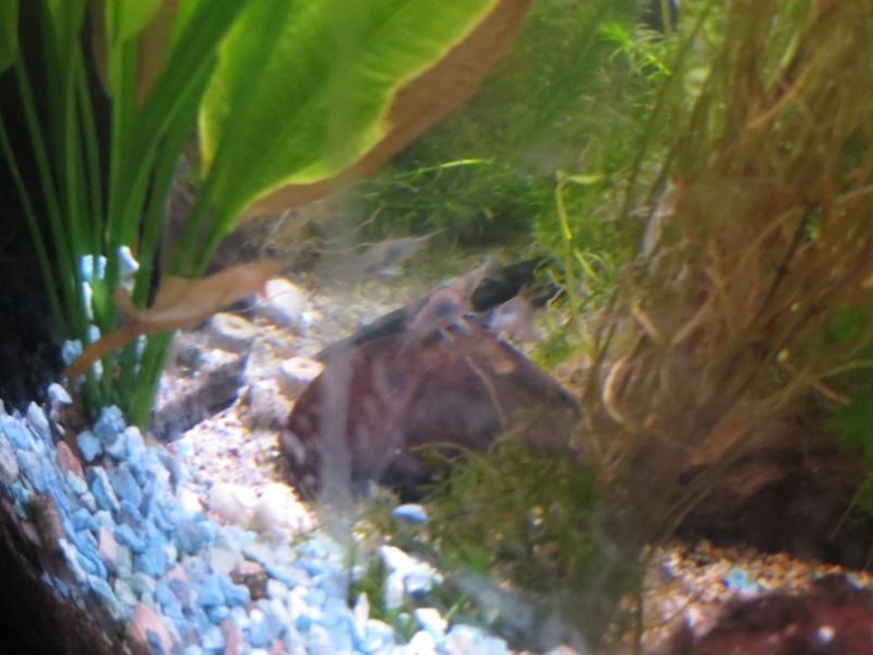 Aquarium TST 04_cor10