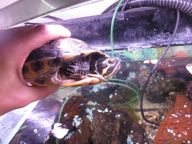Aquarium TST 09_gra13