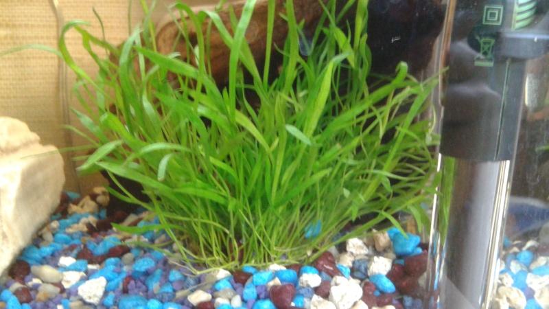 Lancement aquarium 20L débutant 20150813