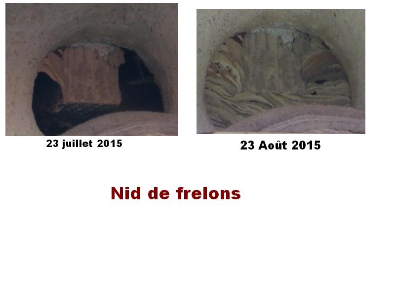 nid de frelons combles (photos) Sans_t10