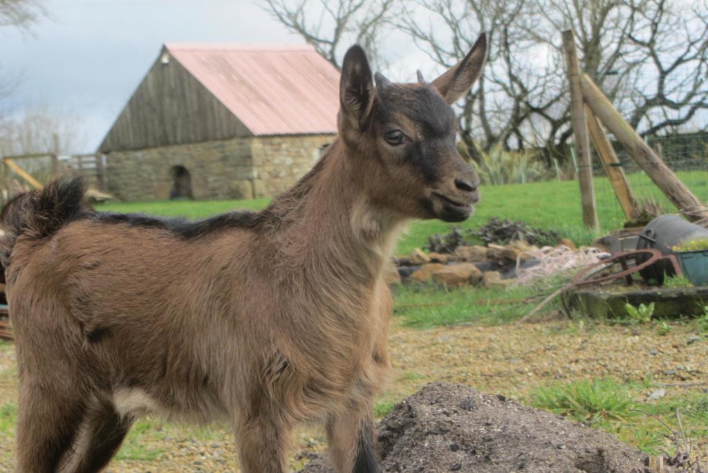 PRUNELLE - Fille d'Innocente (Réformée d'élevage) Img_4113